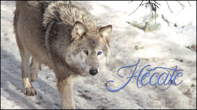 Les grands méchants loups - Prio Hécate 150417084902731841