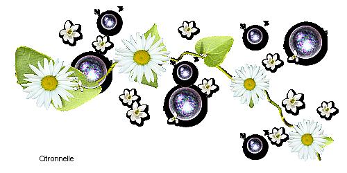 fleurs marguerites 120305085350299546