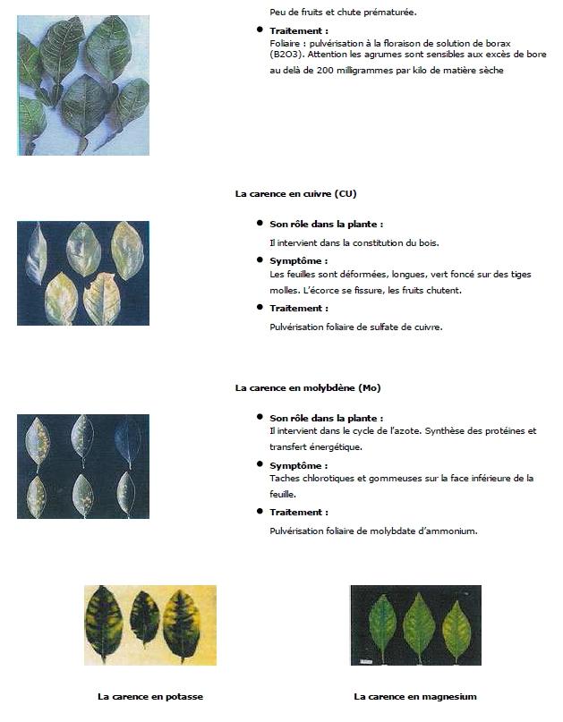 Engrais , oligos et carences 150523052819436703