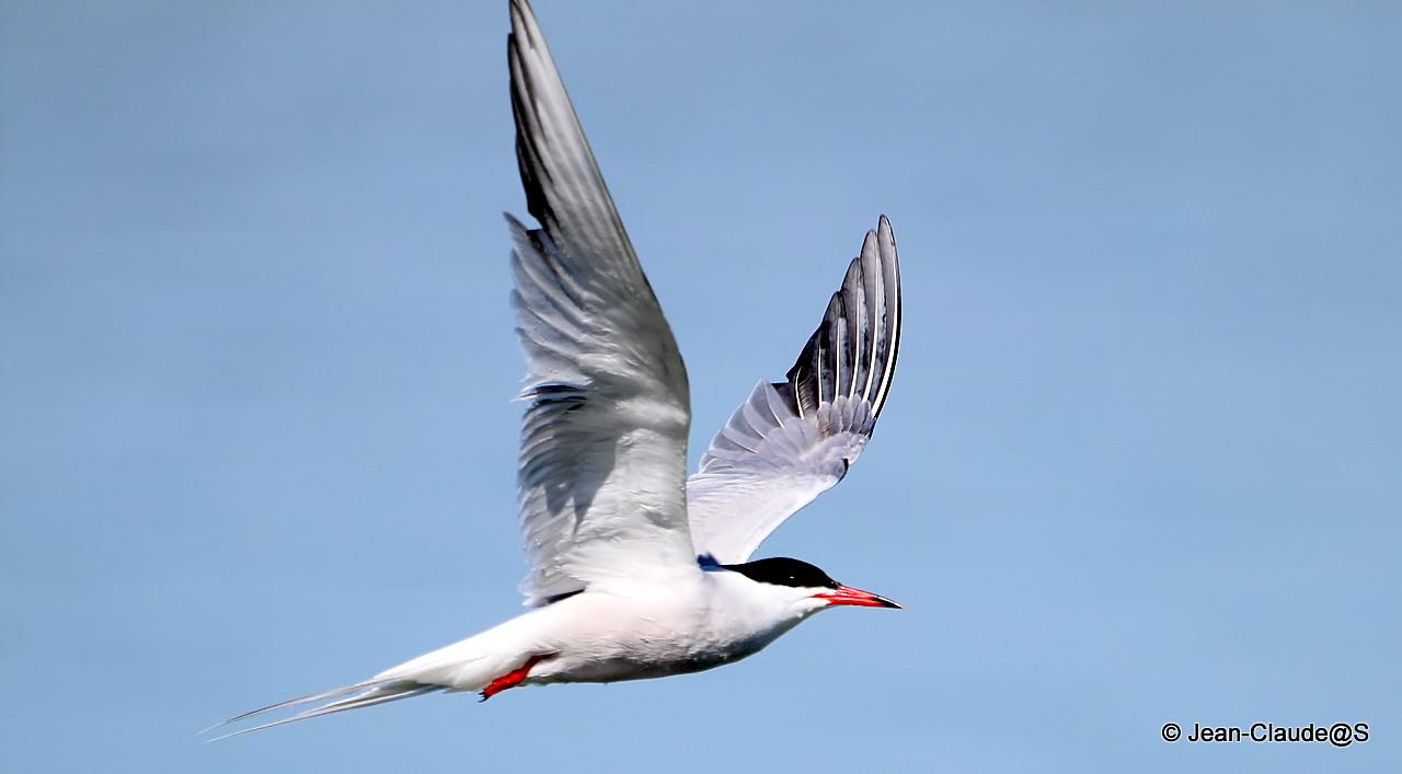 Les oiseaux de la Ria d'Etel 150524063132965000