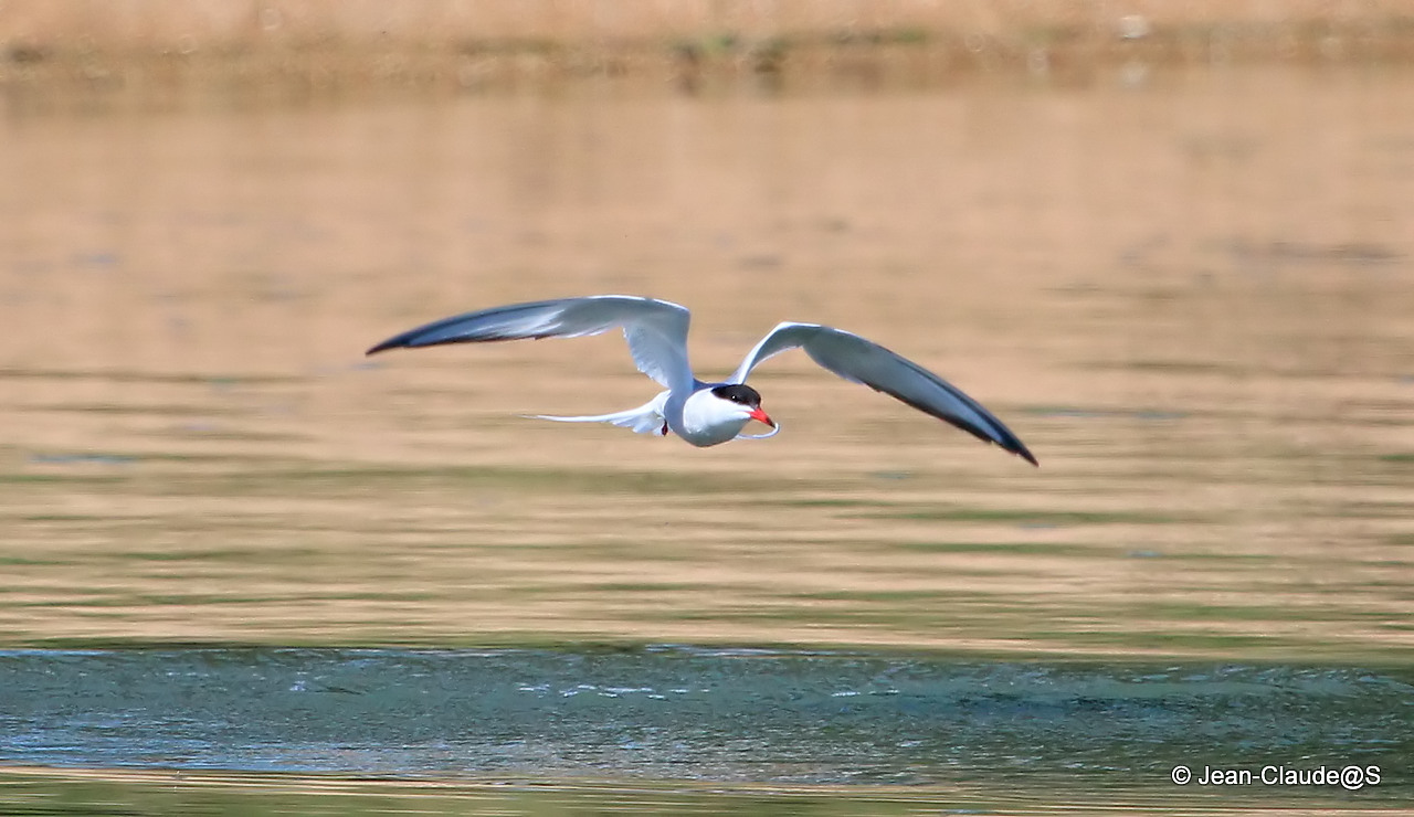 Les oiseaux de la Ria d'Etel 150524063134511282