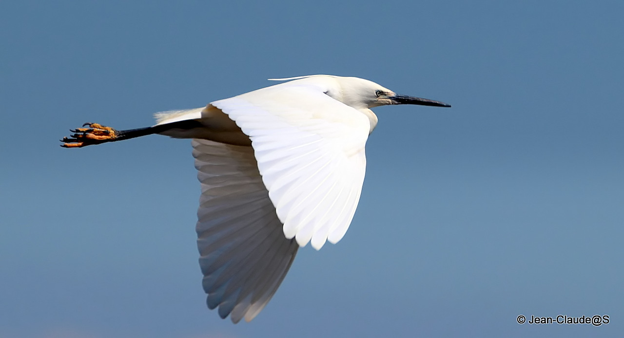 Les oiseaux de la Ria d'Etel 150527104511824374