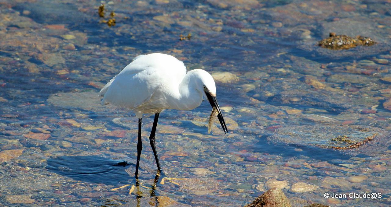 Les oiseaux de la Ria d'Etel 150527104527545186