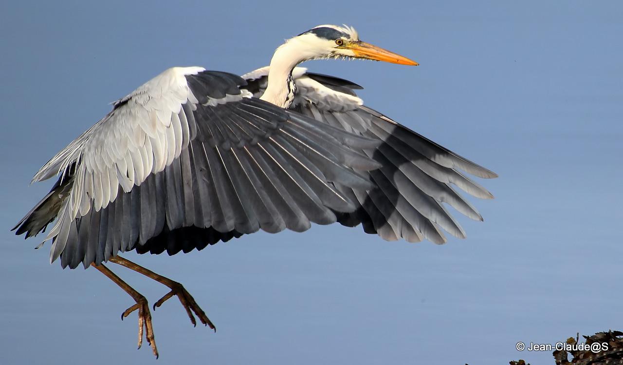Les oiseaux de la Ria d'Etel - Page 2 150530102651198132
