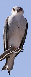 Oiseaux - Page 4 Mini_150607044949111088