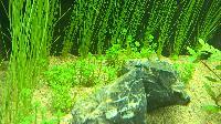 Plantes qui pourrissent Mini_150620122058493440