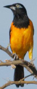 Oiseaux - Page 5 Mini_15062909151321674