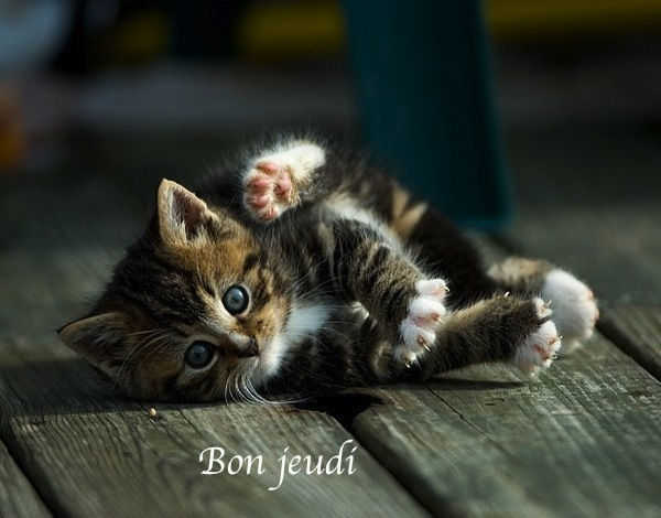Bon Jeudi 15070210180827045