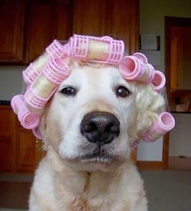 chien_femme_je_vous_aime_bigoudi_cheveux_coiffure