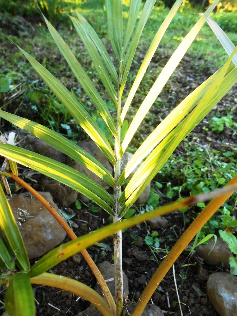 palmiers maison 2046
