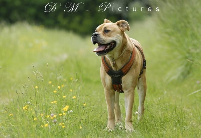 Rencontre canine du forum en région bordelaise (33) - Page 3 150714111632918822