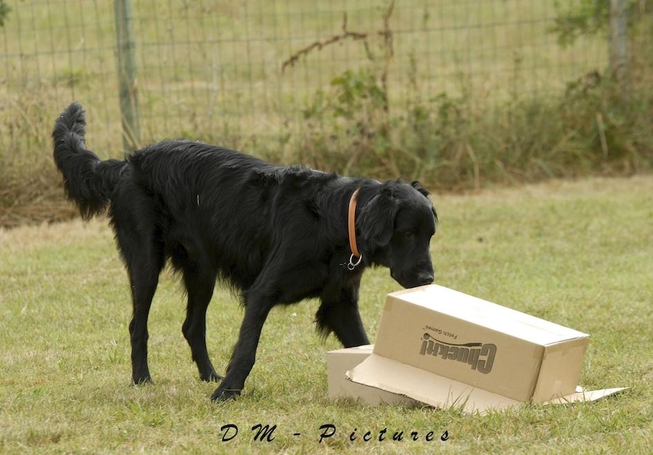 Animalin Camp d'été Discrimination d'Odeurs et Activités 2015 150725105813834049