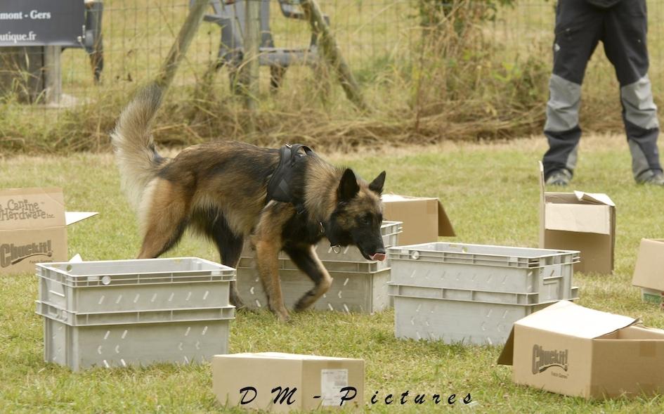 Animalin Camp d'été Discrimination d'Odeurs et Activités 2015 150725105824151546