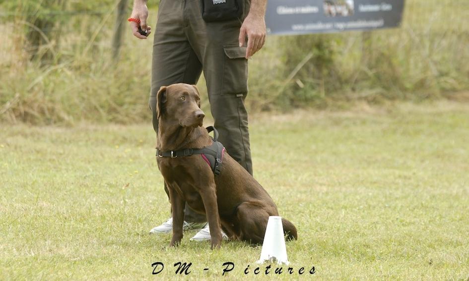 Animalin Camp d'été Discrimination d'Odeurs et Activités 2015 150725111206361557
