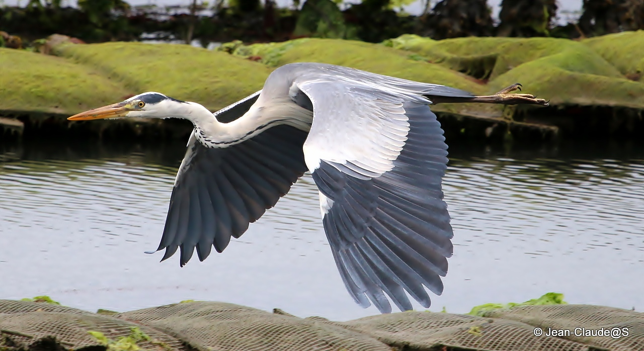 Les oiseaux de la Ria d'Etel - Page 2 150728040813228142