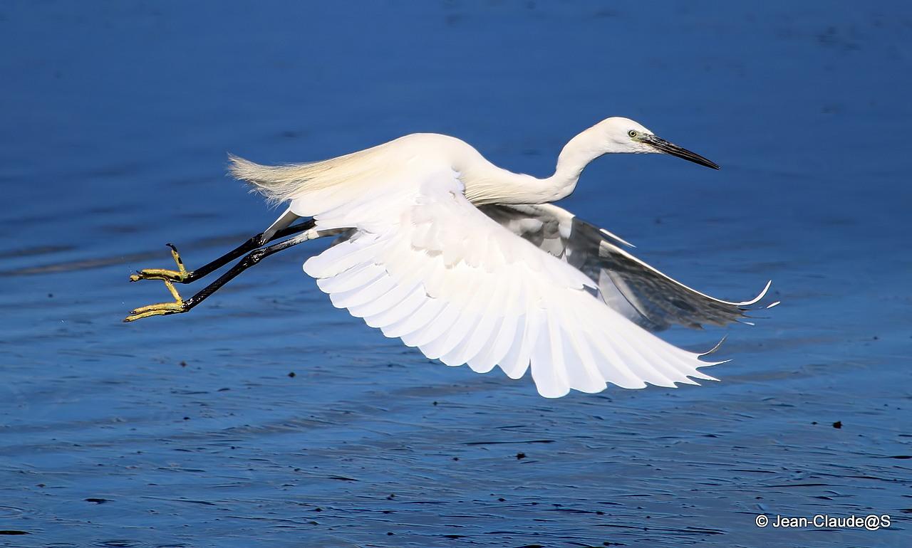 Les oiseaux de la Ria d'Etel - Page 2 150729120800637214