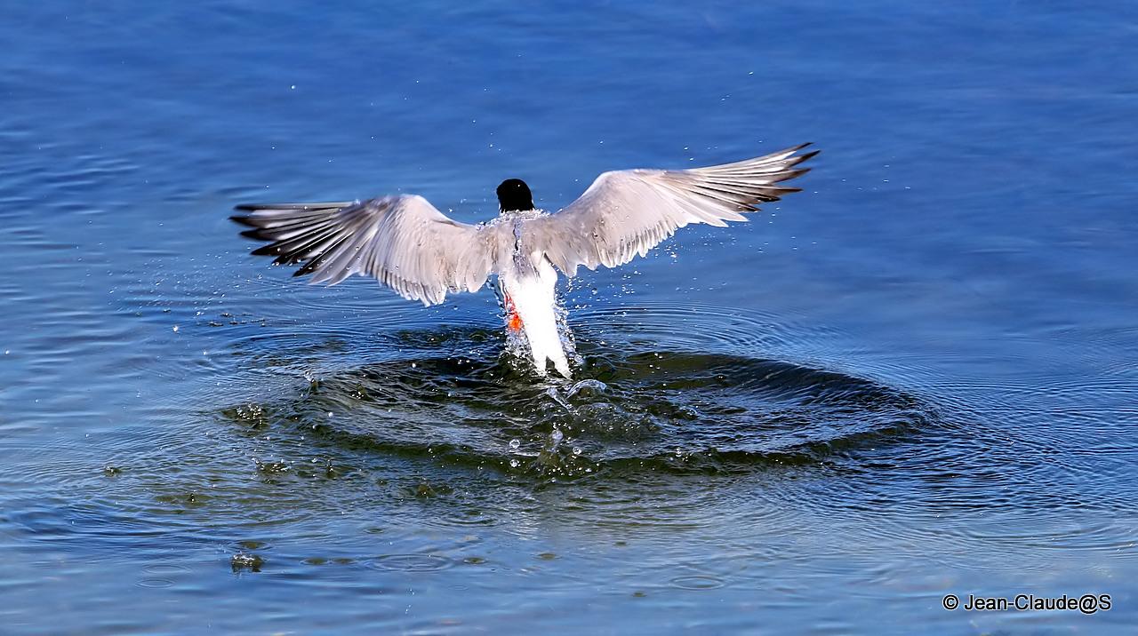 Les oiseaux de la Ria d'Etel - Page 2 150729120821344175