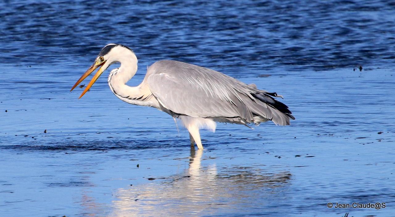 Les oiseaux de la Ria d'Etel - Page 2 150729120827367996
