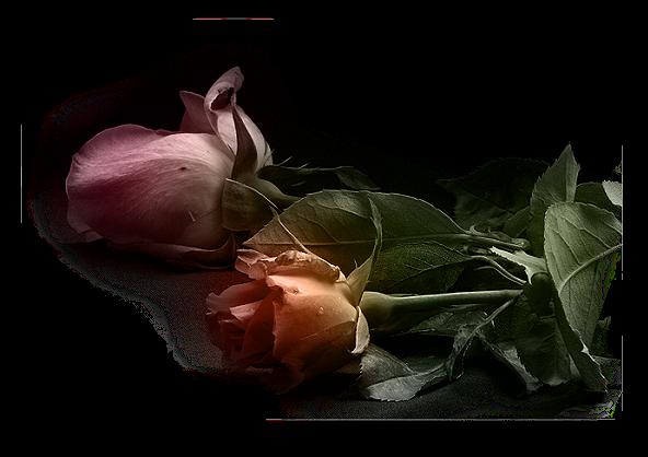 fleurs roses deux 1
