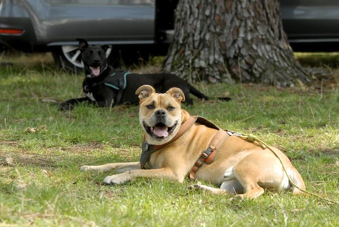 Rencontre canine du forum en région bordelaise (33) - Page 5 15081202185751542
