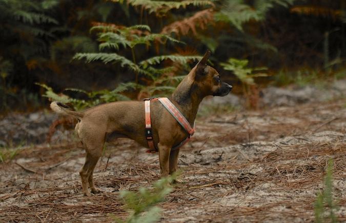 Rencontre canine du forum en région bordelaise (33) - Page 6 150813065446230422