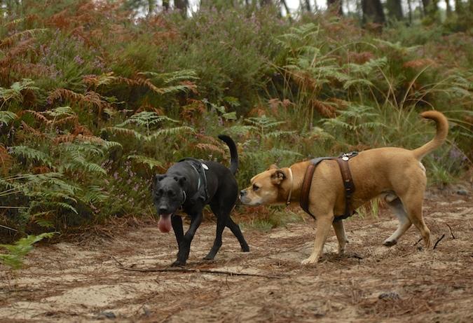 Rencontre canine du forum en région bordelaise (33) - Page 6 150813065447571063