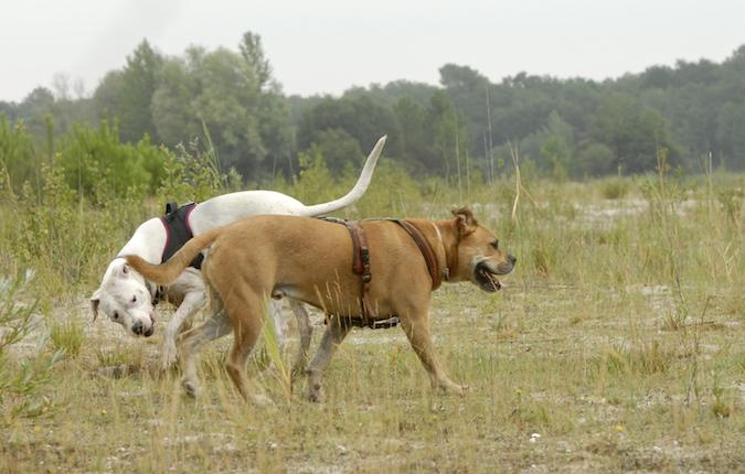 Rencontre canine du forum en région bordelaise (33) - Page 6 150813065448301501