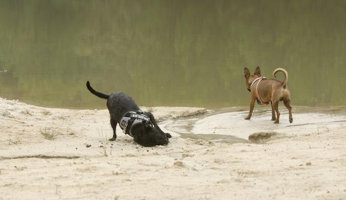 Rencontre canine du forum en région bordelaise (33) - Page 6 150813065745157071