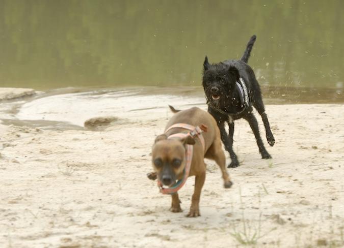 Rencontre canine du forum en région bordelaise (33) - Page 6 150813065747141318