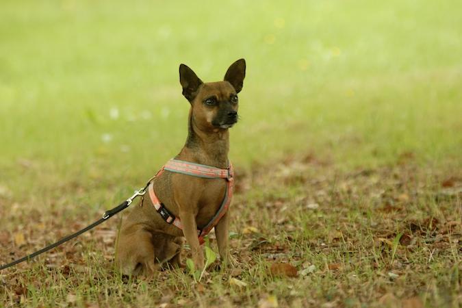 Rencontre canine du forum en région bordelaise (33) - Page 6 150813070638118648