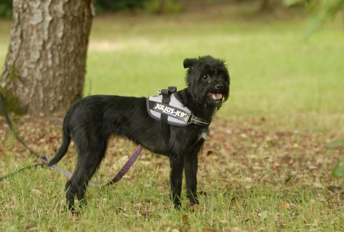 Rencontre canine du forum en région bordelaise (33) - Page 6 150813080320813807