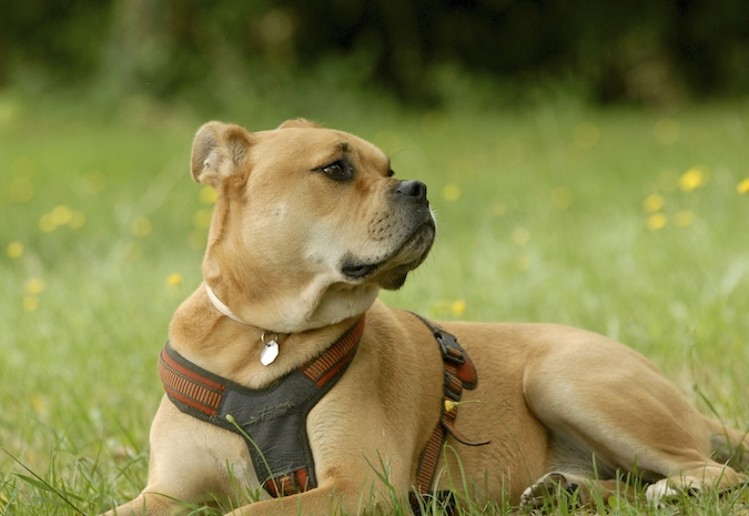 Rencontre canine du forum en région bordelaise (33) - Page 6 150813080321591278