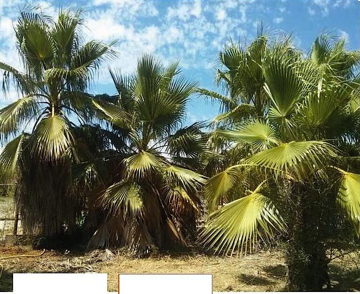 Aperçu de «Palmier Jardinage Var - leboncoin.fr»_Page_2