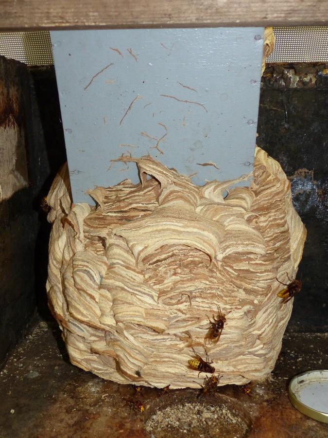 nid construit dans une boite a oiseaux 150910101336926055