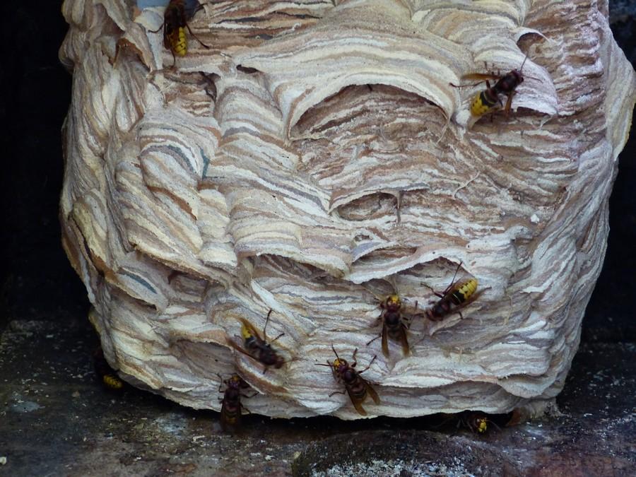 nid construit dans une boite a oiseaux 150910101458925236