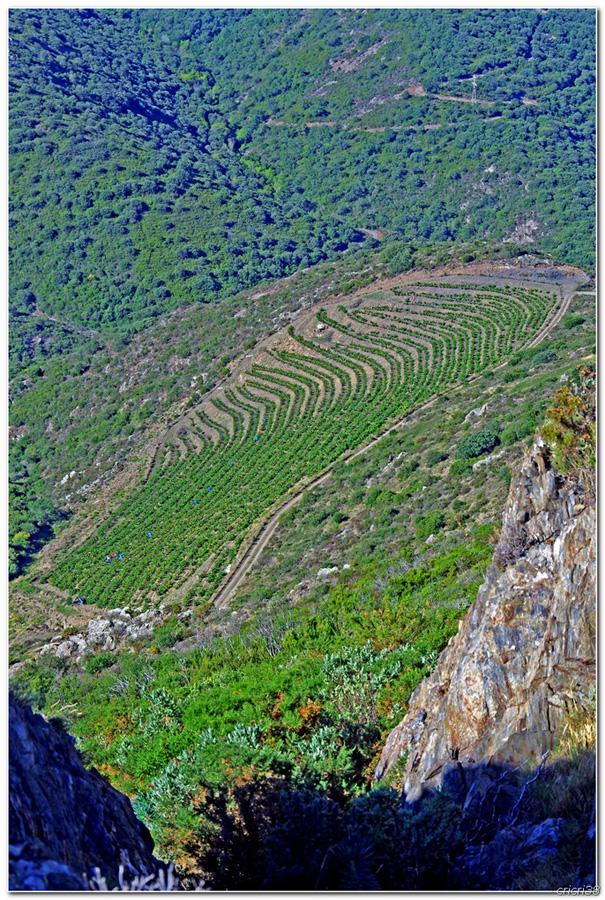 Vue sur les Vignobles de  Banyuls et de la tour  Madeloc 15092911000052786