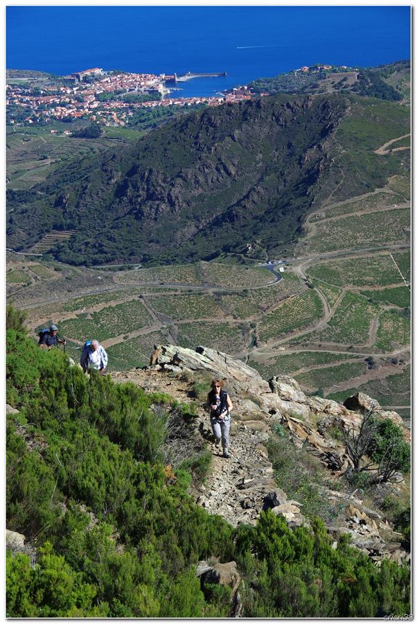 Vue sur les Vignobles de  Banyuls et de la tour  Madeloc 150929110025805807