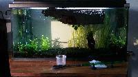 Aquarium de bureau 80L Mini_151002022146109972