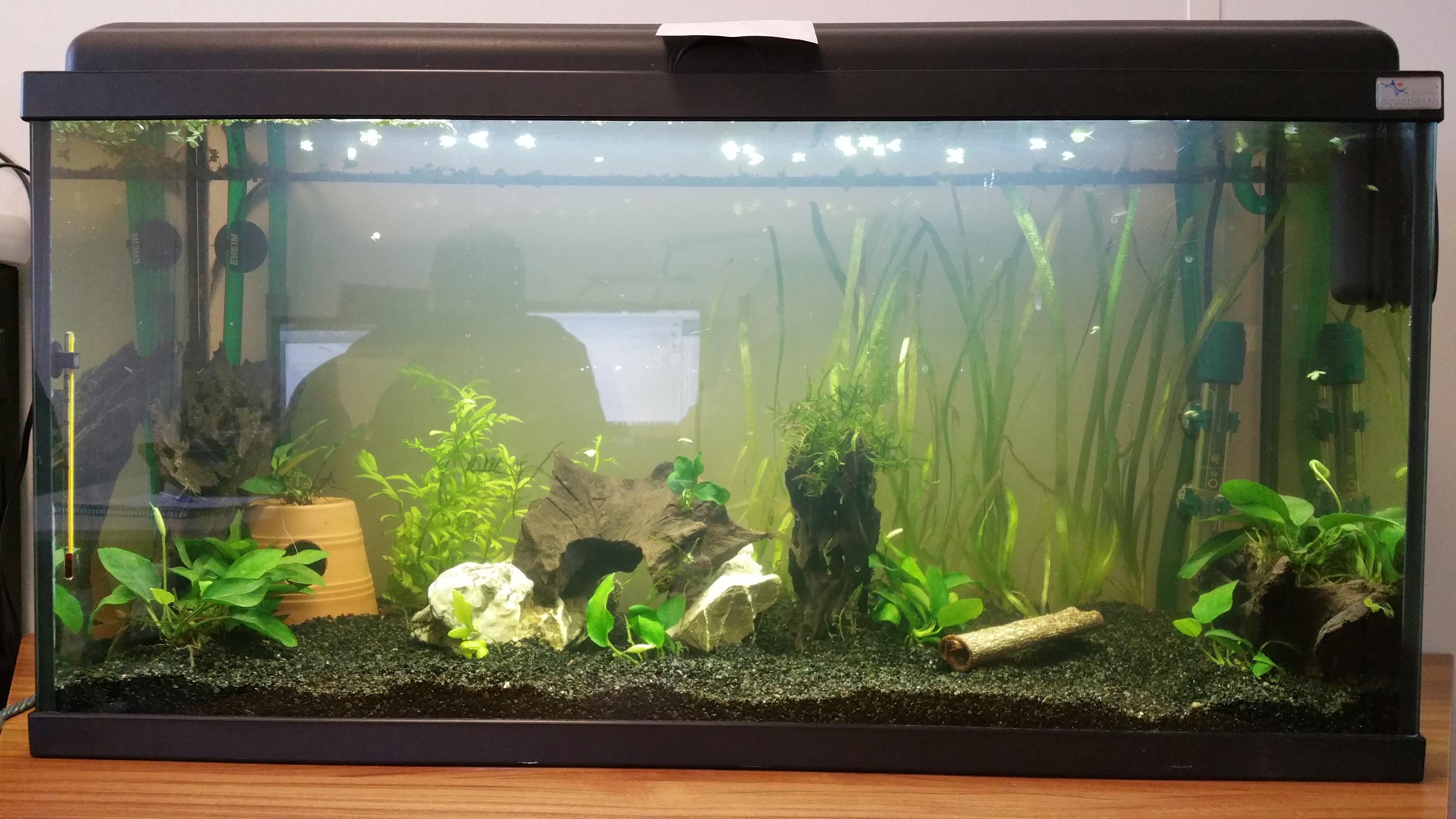 Aquarium de bureau 80L 151008014424654094