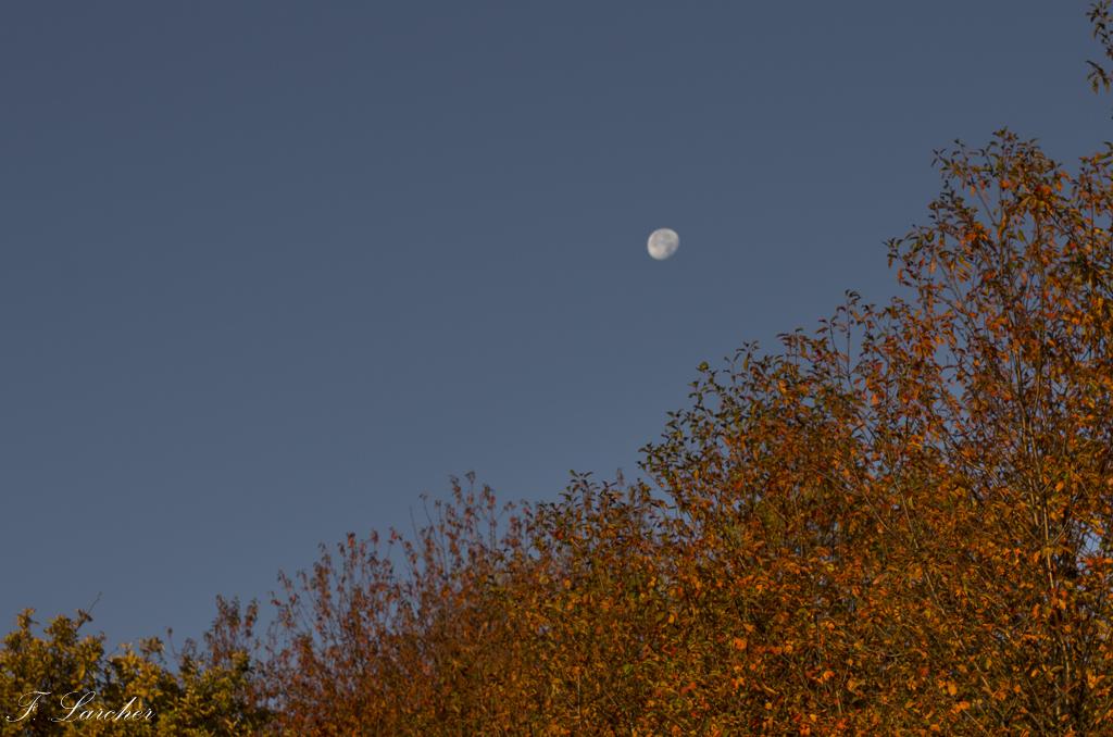 Couleurs d'automne dans le vignoble ardéchois 151114074200495652
