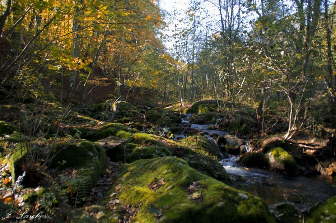 Couleurs d'automne dans le vignoble ardéchois 151114074208715144