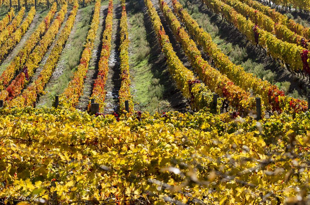 Couleurs d'automne dans le vignoble ardéchois 15111407421337134