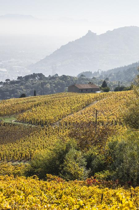 Couleurs d'automne dans le vignoble ardéchois 151114074227325120