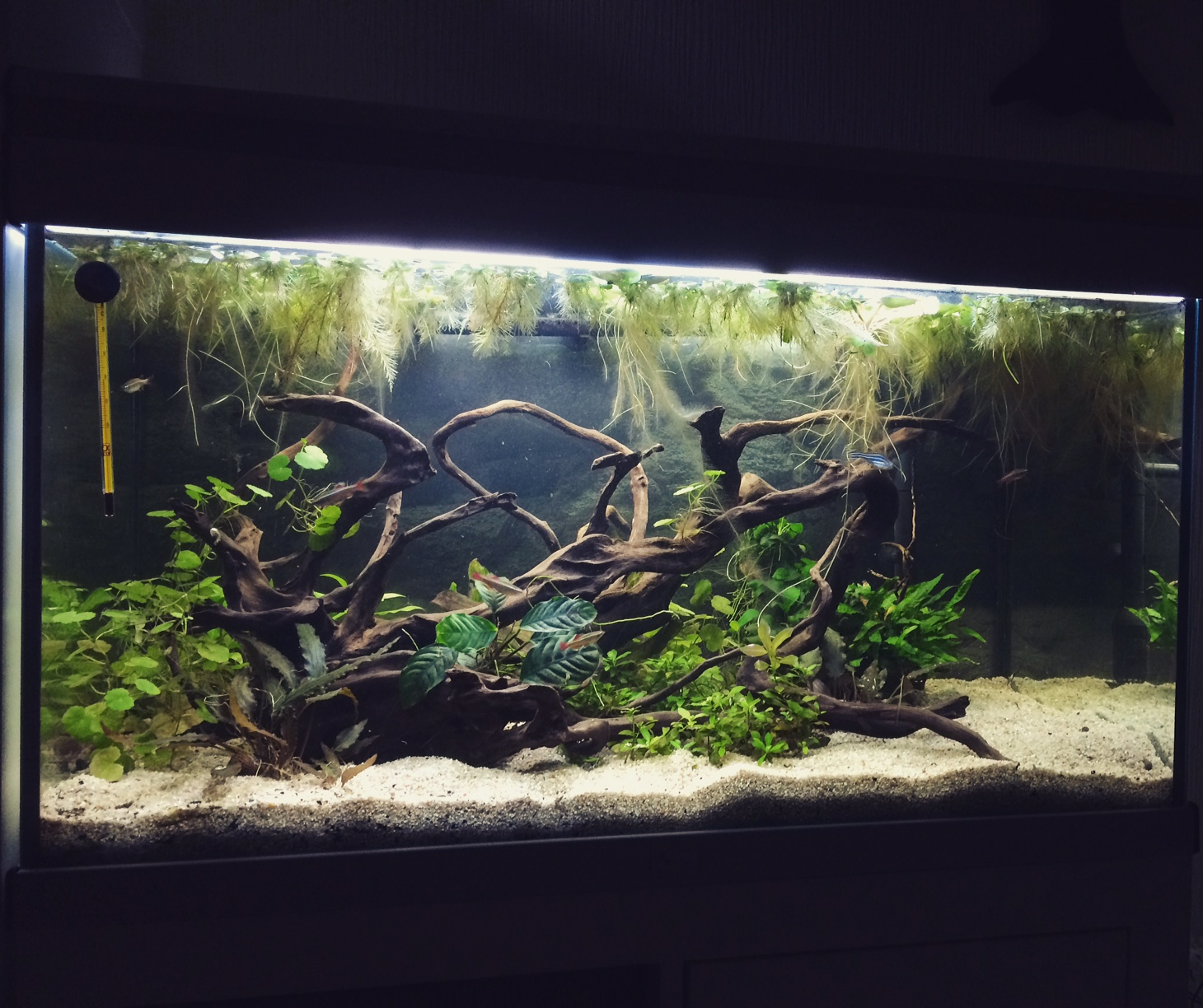 aquarium ambiance 80 138l. Black Bedroom Furniture Sets. Home Design Ideas