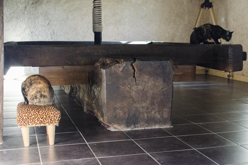 Chipo (anciennement Laurelle), femelle type européen écaille de tortue née 15/04/2015 - Page 2 151129115637845275
