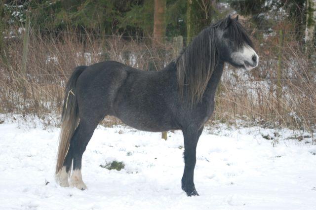 poney oss5