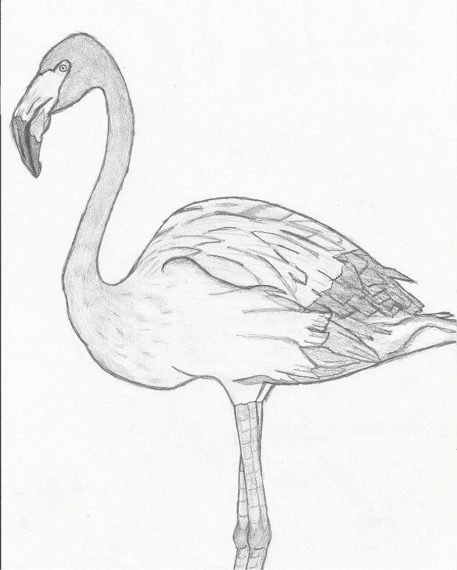 Yalerie dessin de Skull 1512220224479553