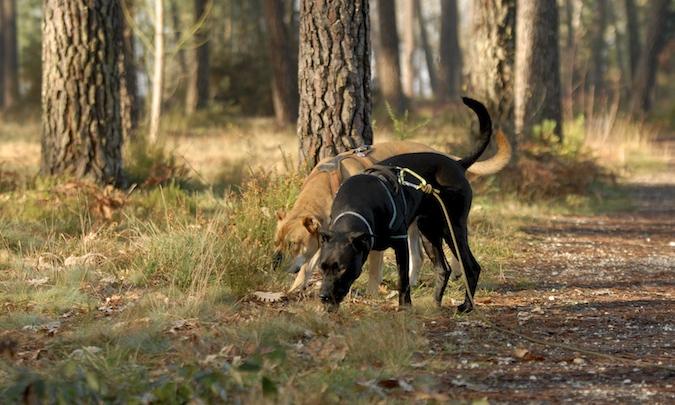 Rencontre canine du forum en région bordelaise (33) - Page 7 151222065908900104