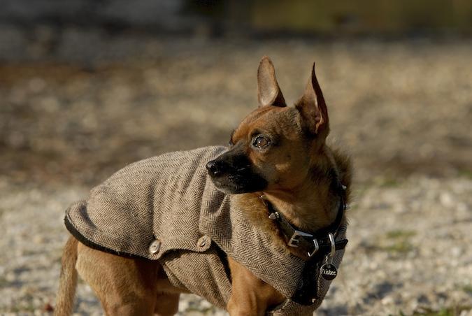 Rencontre canine du forum en région bordelaise (33) - Page 7 151222070331633098