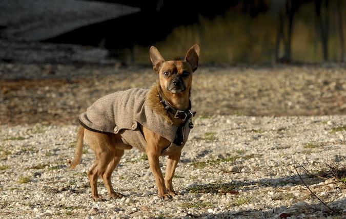 Rencontre canine du forum en région bordelaise (33) - Page 7 151222070332109029